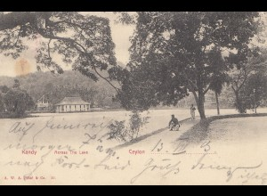 Ceylon: 1903: picture post card: Kandy to Naumburg/Germany