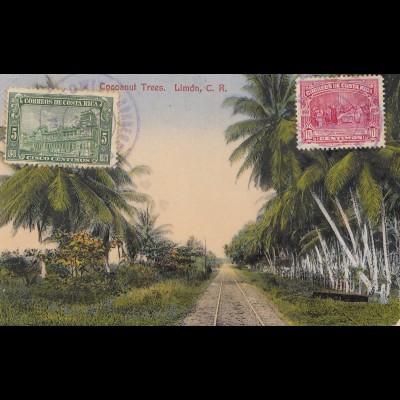 Costa Rica: 1935 picture post card Cocoanut Trees Limon